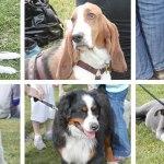 Henderson's Bark in the Park – Saturday, March 5