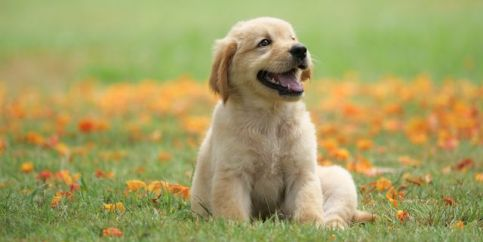 dog-puppy-on-garden-royalty-free-image-1586966191