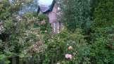 Southsyde garden