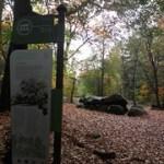 Wandelen over het Drenthepad van Borger naar Zuidlaren