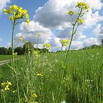 Wandeling in Salland in Boetelerveld en rond Hellendoornse Berg
