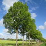 Bos- en beekwandeling tussen Den Ham en Vroomshoop