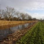 Wandelen als een watergraaf in zuidelijk deel gemeente Amsterdam