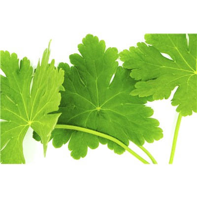 Organic Egyptian Geranium Bourbon Essential Oil