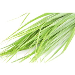 lemongrass leaf
