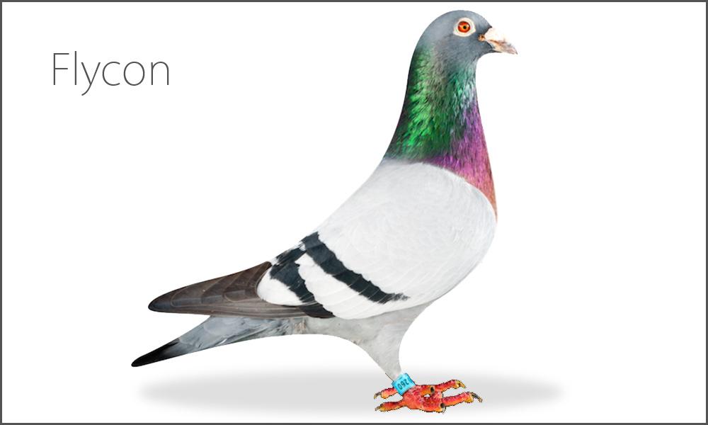 Flycon