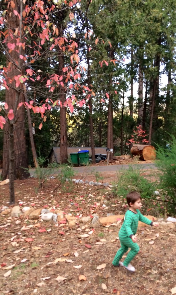 Stanislaus National Forest with kids | Strawberry with Kids | Twain Harte with Kids | Tuolumne County with kids