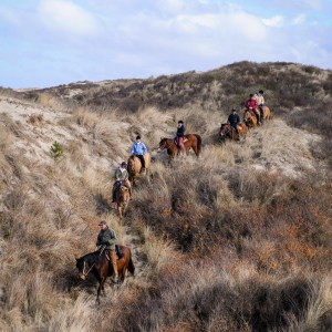 Autumn ride with Henson horses in Marquenterre