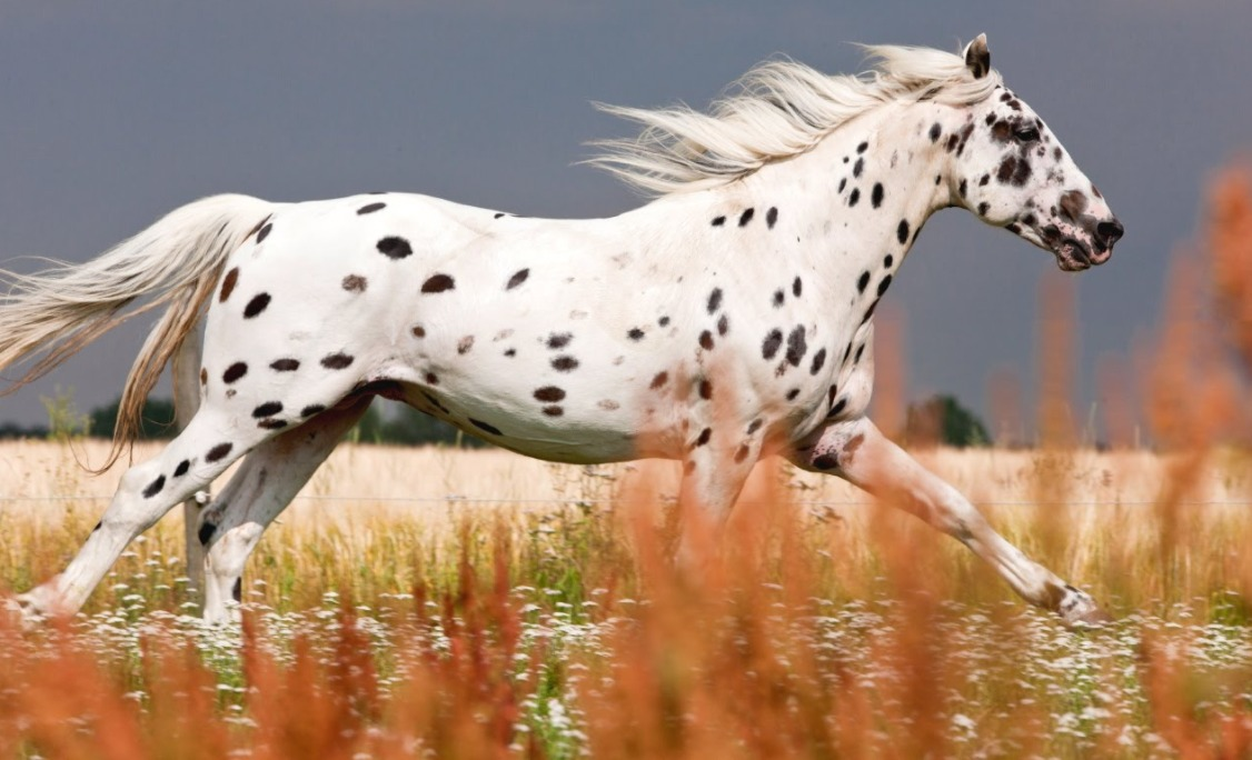 5 of the Rarest Horse Breeds in the World  HenSpark