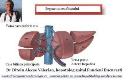 segmentarea-ficatului