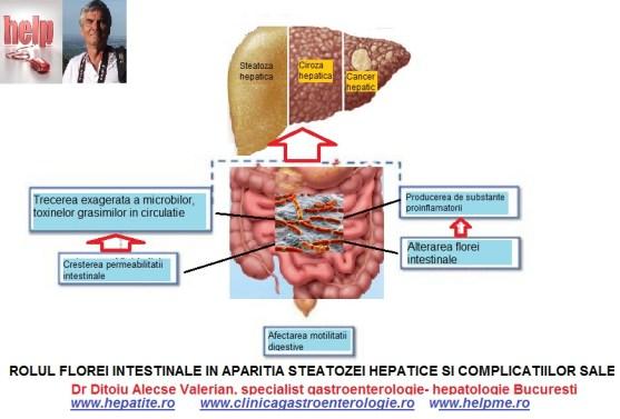 steatoza-hepatica=si-flora-intestinala