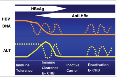 Cum evolueaza hepatita b