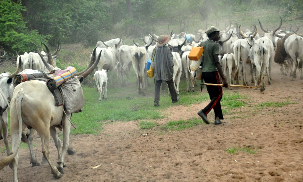 PIC.5.HERDSMEN AND THEIR COWS ON THE MOVE AT NASARAWA-EGOM ON FRIDAY   (10/7/15). 5300/10/7/2015/CH/NAN