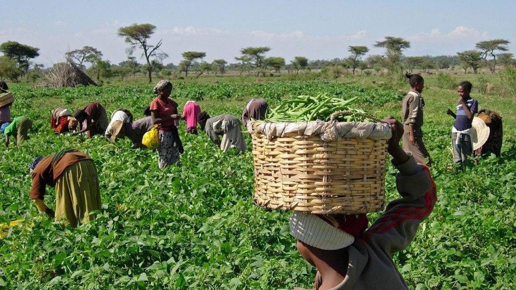 Nigerian-farmers