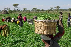 Nigerian-farmers-1