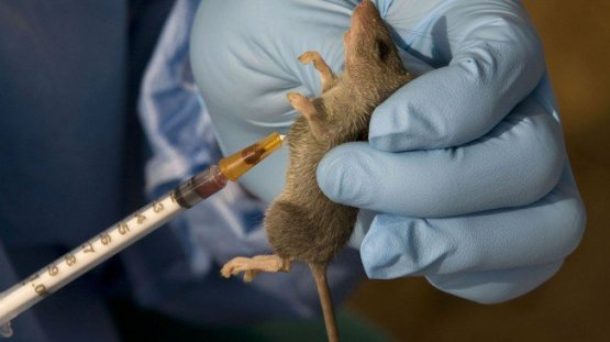 Lassa fever now in 33 states - NCDC