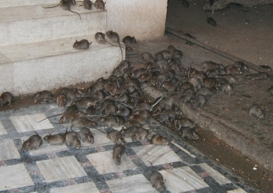 Update: Lassa fever takes five lives in three states