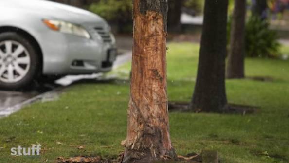 Car heat kills three young girls