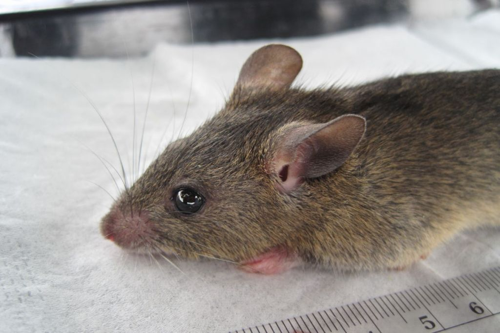 States working with FG to combact Lassa fever