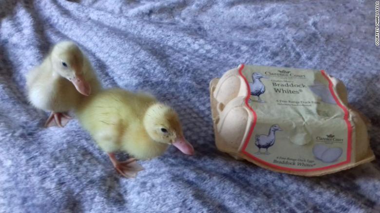 200614112722-03-supermarket-eggs-hatched-exlarge-169.jpg