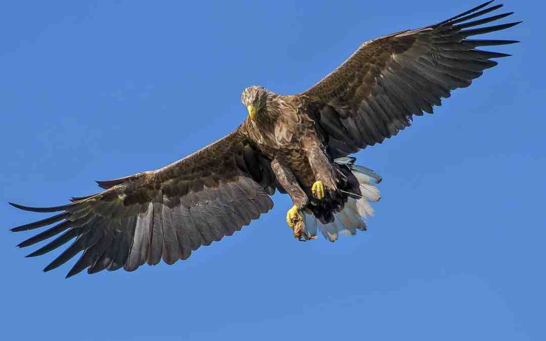 Two Wings of the Great Eagle of Revelation 12 - The Herald