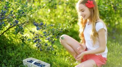 ילדה בשדה אוכמניות