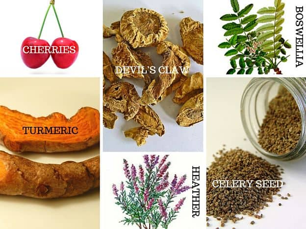 herbs for gout
