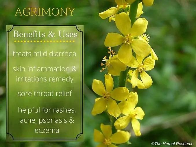 agrimony benefits