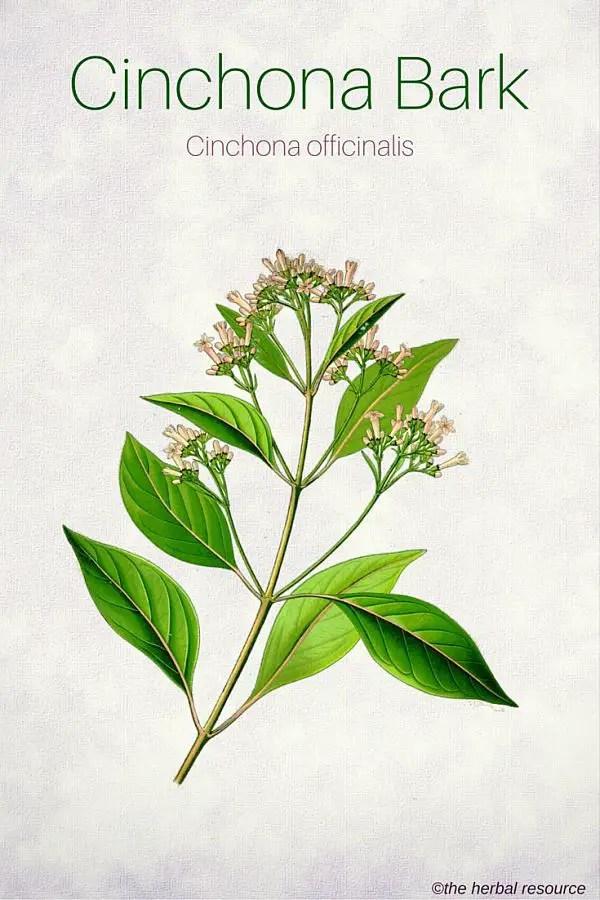 medicinal uses of alkaloids pdf