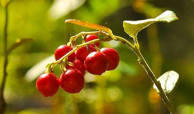 Nature S Bounty Cranberry  Mg How Much Cranberry
