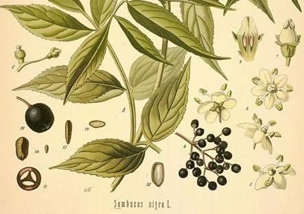 Elderberry Wheat Beer