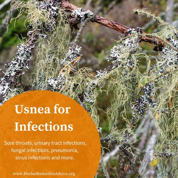 https://i0.wp.com/www.herbalremediesadvice.org/images/Usnea-herb.jpg