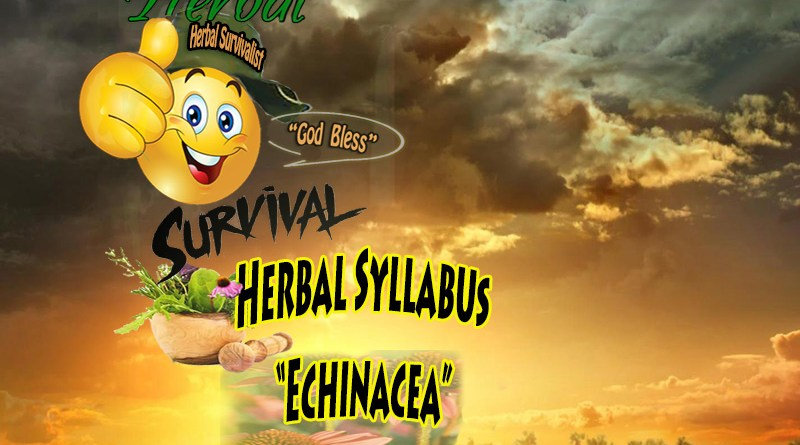 Echinacea Herbal Syllabus
