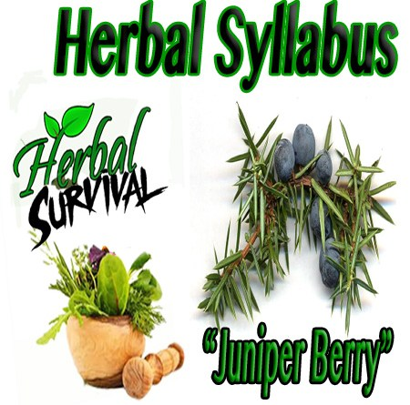 "herbal Syllabus ""Juniper Berry"