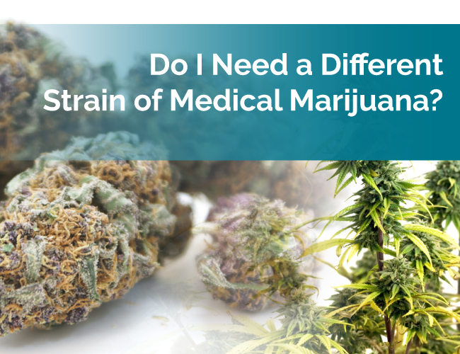 different strain of marijuana