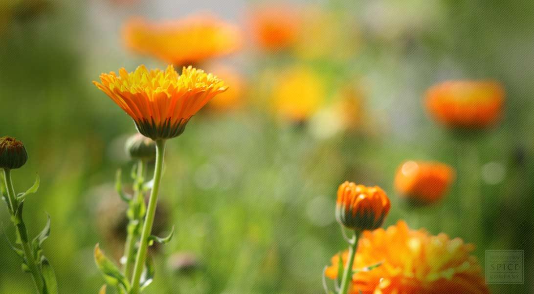 Marigold and Calendula for the Skin