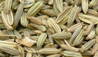 Fenouil (hui xiang) – 茴 香