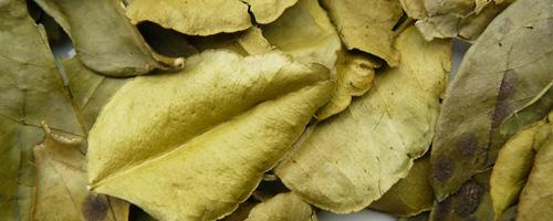 feuilles de citron