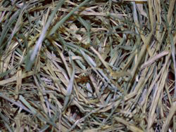 Herb Magic Catalogue A Couch Grass