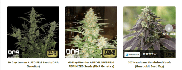 True North out of stock seeds example