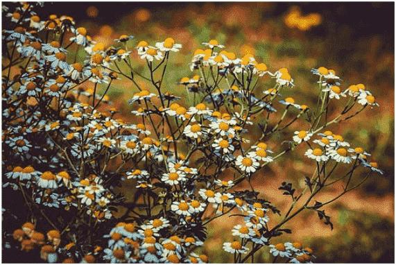 El poder preventivo y curativo de las plantas