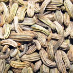 Fennel fruits (seeds)