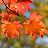 Why Leaves Change Color and Other Fall Facts