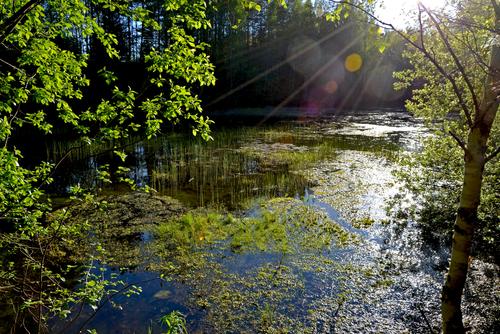 forest pond in springtime