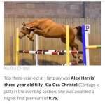 Alex Harris Horses, Kent's Green, Newent.