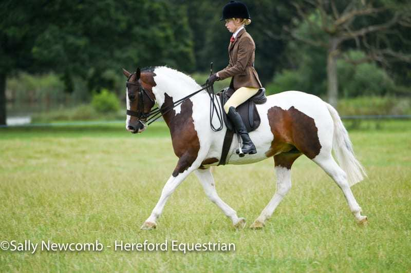 https://i0.wp.com/www.herefordequestrian.co.uk/wp-content/uploads/2017/07/D4S_6506.jpg