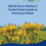 Do You Know Your Poisonous Plants?