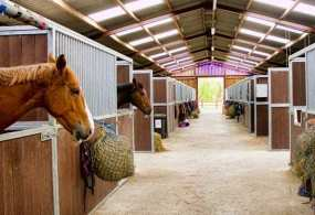 stable-horse