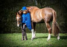Horse & Dog Photographer Hereford. Fine Art Tailored Photoshoots