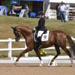 Para riders dazzle at the first day of the Festival of Dressage